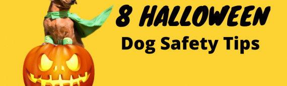 8 Halloween Dog Safety Tips